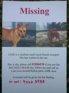 missing-dog-chilli-amk