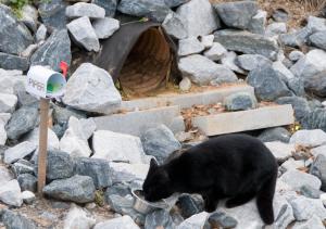 piper-pipeline-cat