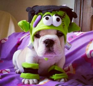 Frankenweenie-jmarcoz-bulldog