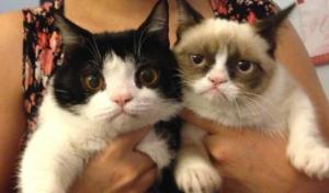 grumpy-pokey-cat