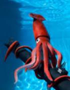 squid-china