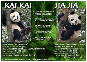 pandas-singapore-jia-jia-kai-kai